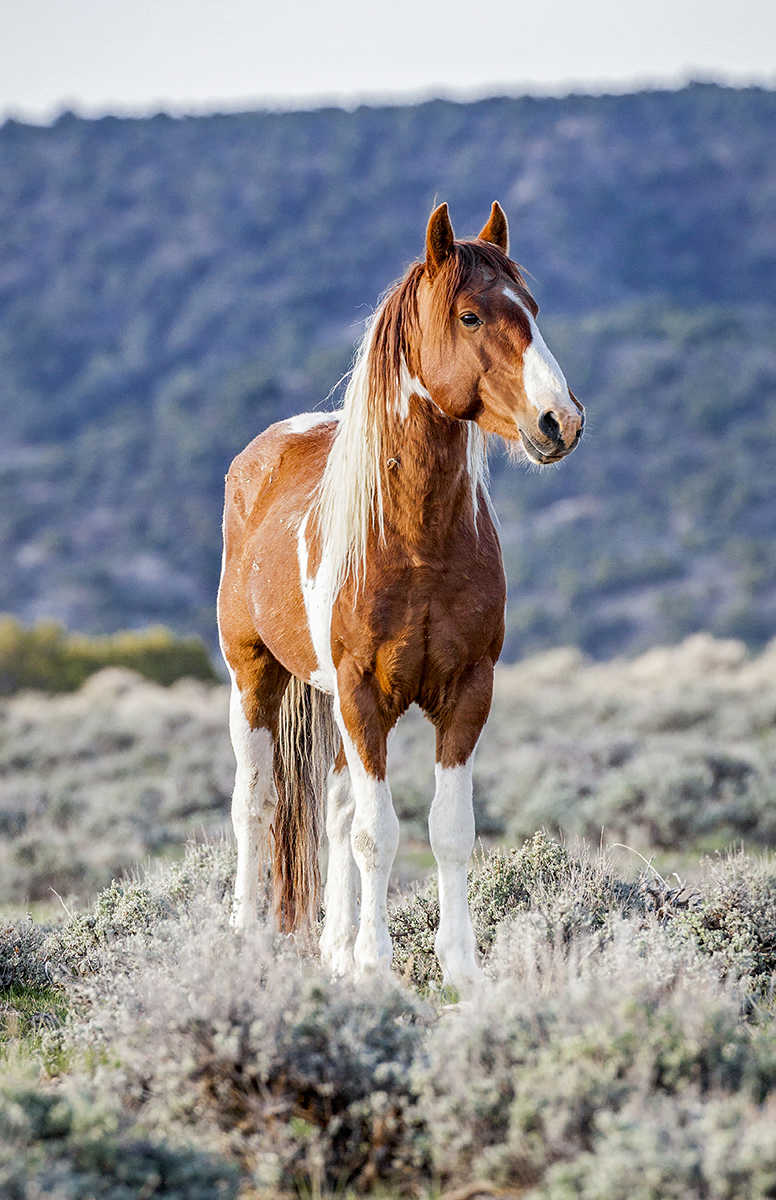 Wild Horse Photographs Featured At Glenwood Opening Colorado Mountain College Enews